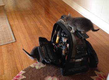 Kittens On Toolbox